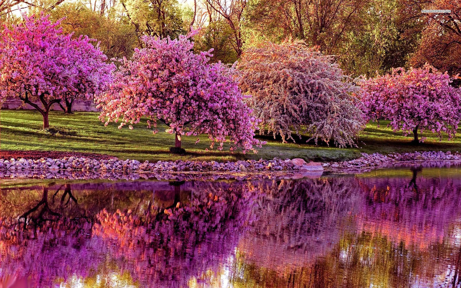 Spring Trees And Flowers Wallpaper Full Images 2 Kelley Rosano